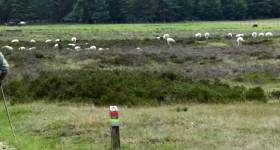 Landal Vakantieparken op de Veluwe, tips aanbiedingen en korting