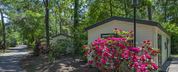 Roompot vakantiepark omringd door bos